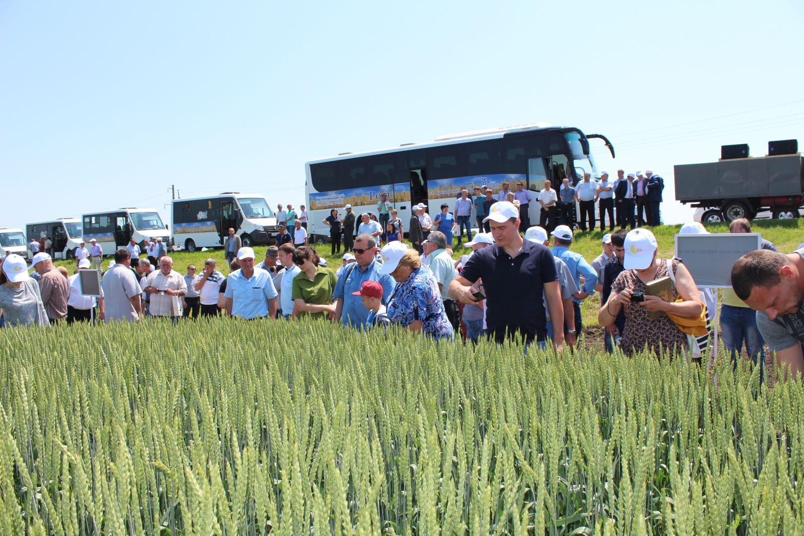 Минсельхоз края: На Ставрополье производят качественные семена