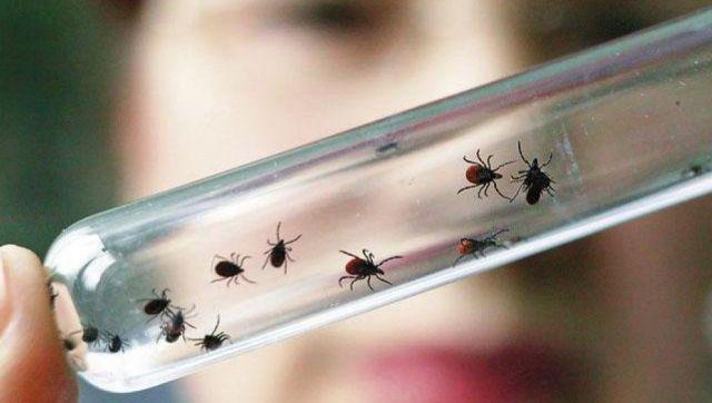 Минздрав СК: От крымской геморрагической лихорадки вакцины нет