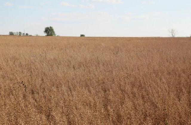 Ставропольские аграрии внедряют новые для региона культуры