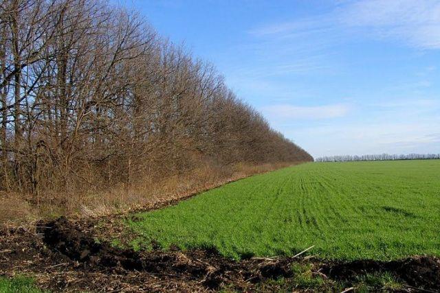 В правительстве Ставропольского края подняли вопрос содержания защитных лесополос