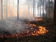 На Ставрополье полыхают природные пожары