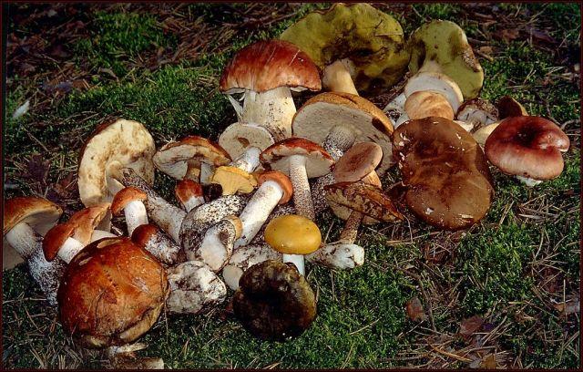 В Ставропольском крае в этом сезоне уже 12 человек отравились грибами