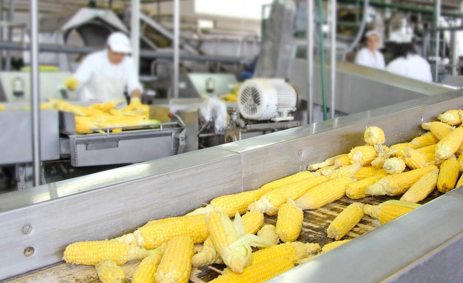 НаСтаврополье построят завод покалибровке кукурузы