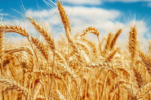 Ставрополье готовится к Всемирному зерновому форуму
