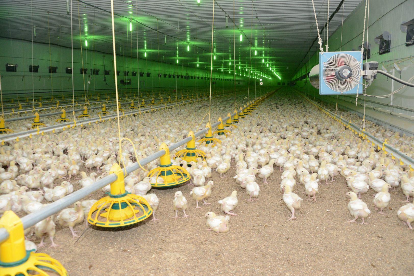 ВСтаврополье открыли новейшую птицефабрику на90 тыс. кур