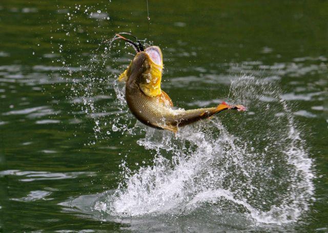 Полторы тонны рыбы выловили в Железноводске в ходе конкурса «Железный крючок»