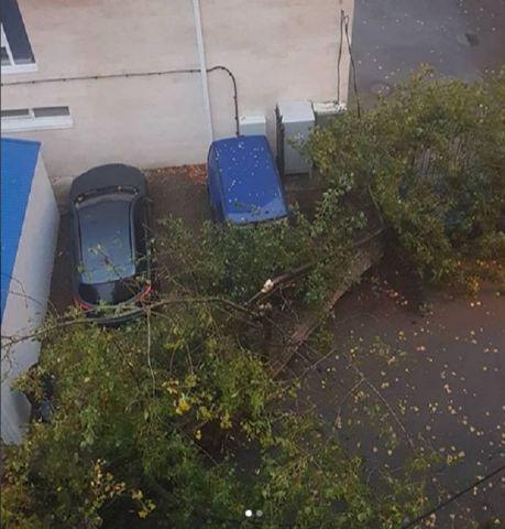 В Ставрополе упавшее дерево повредило машины