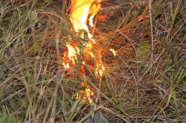 На территории Ставрополья в ближайшие дни ожидается высокая пожароопасность