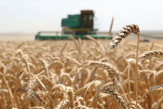 На Ставрополье собрано 7,2 миллиона тонн зерна нового урожая