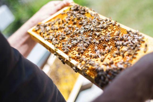 На Ставрополье пчеловоды смогут получить по 70 миллионов рублей поддержки