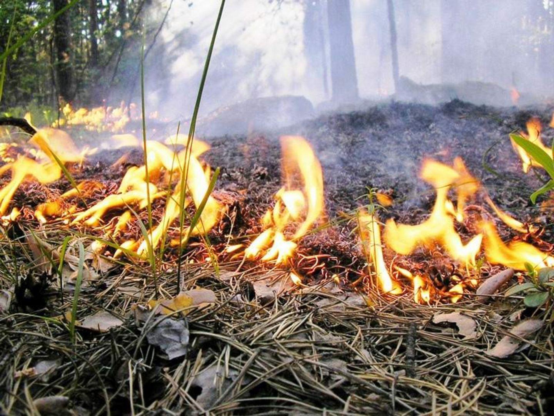 В некоторых районах Ставрополья 25-27 августа сохранится высокая пожароопасность
