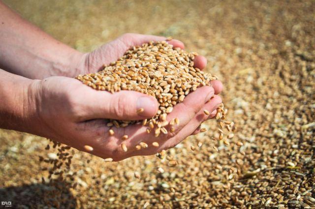 Ставропольский край занимает третье место в России по производству зерна