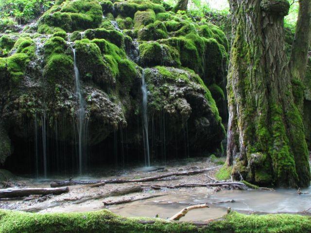 На Ставрополье действует запрет на посещение лесов