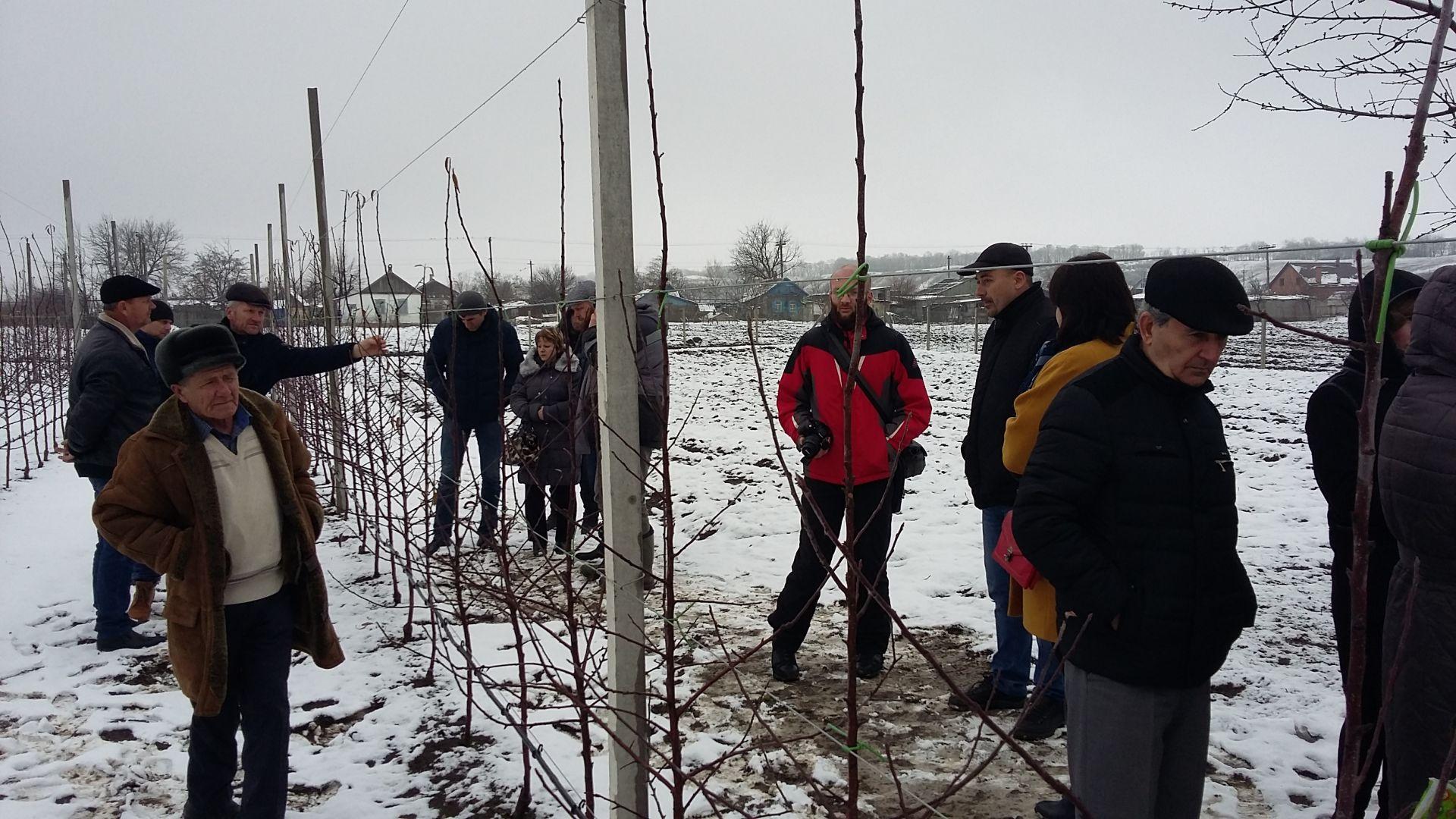 В Георгиевском округе продемонстрировали технологии суперинтенсивного садоводства