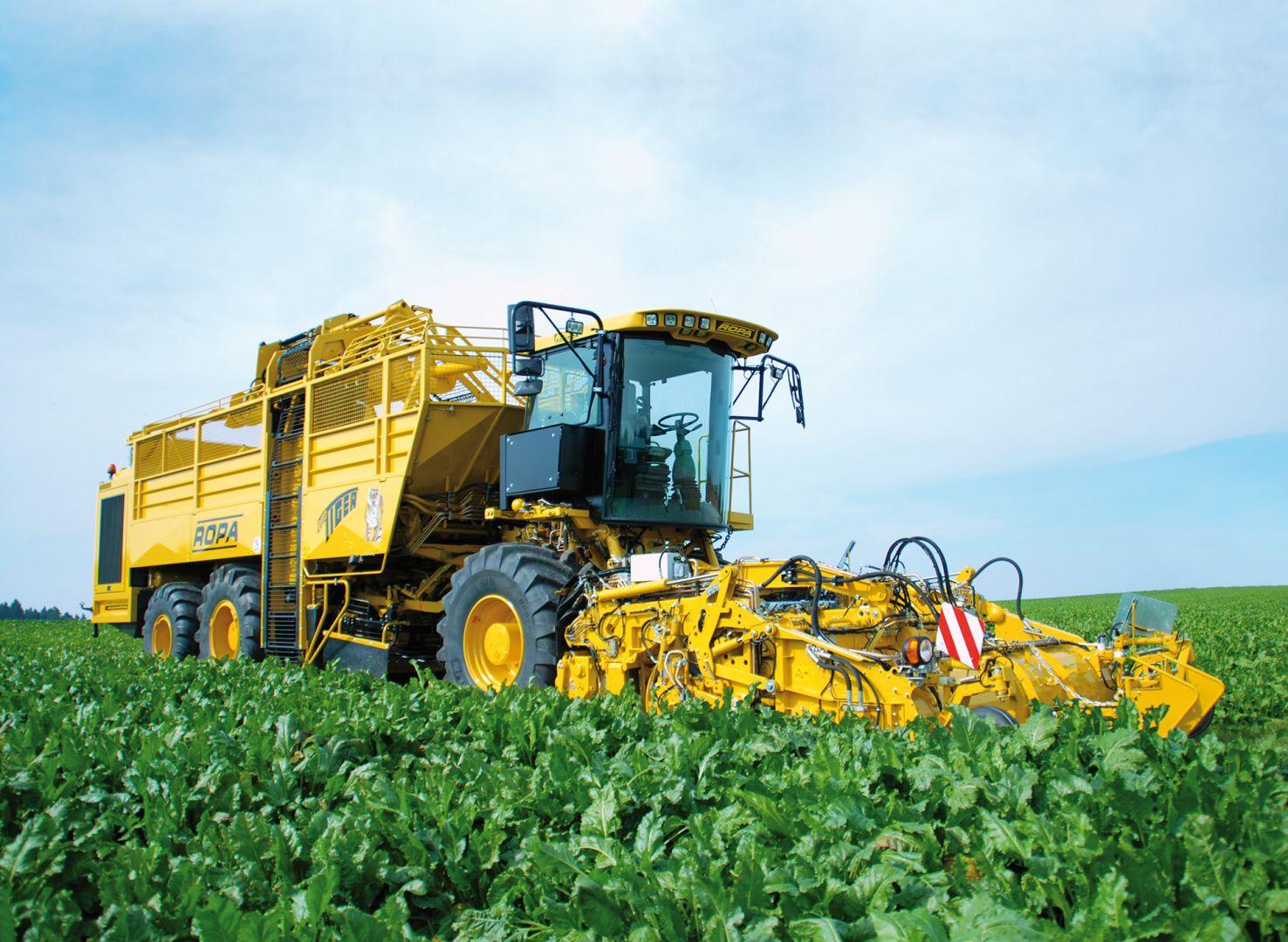 В Ставропольском крае собрано 200 тысяч тонн сахарной свёклы