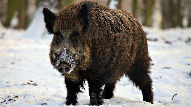 На Ставрополье поймали четырёх браконьеров