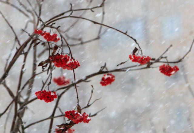 В Ставропольском крае 23 января ожидается сильный снег