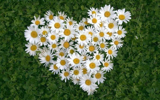 7 июля Ставрополь отметит День семьи, любви и верности большим праздником