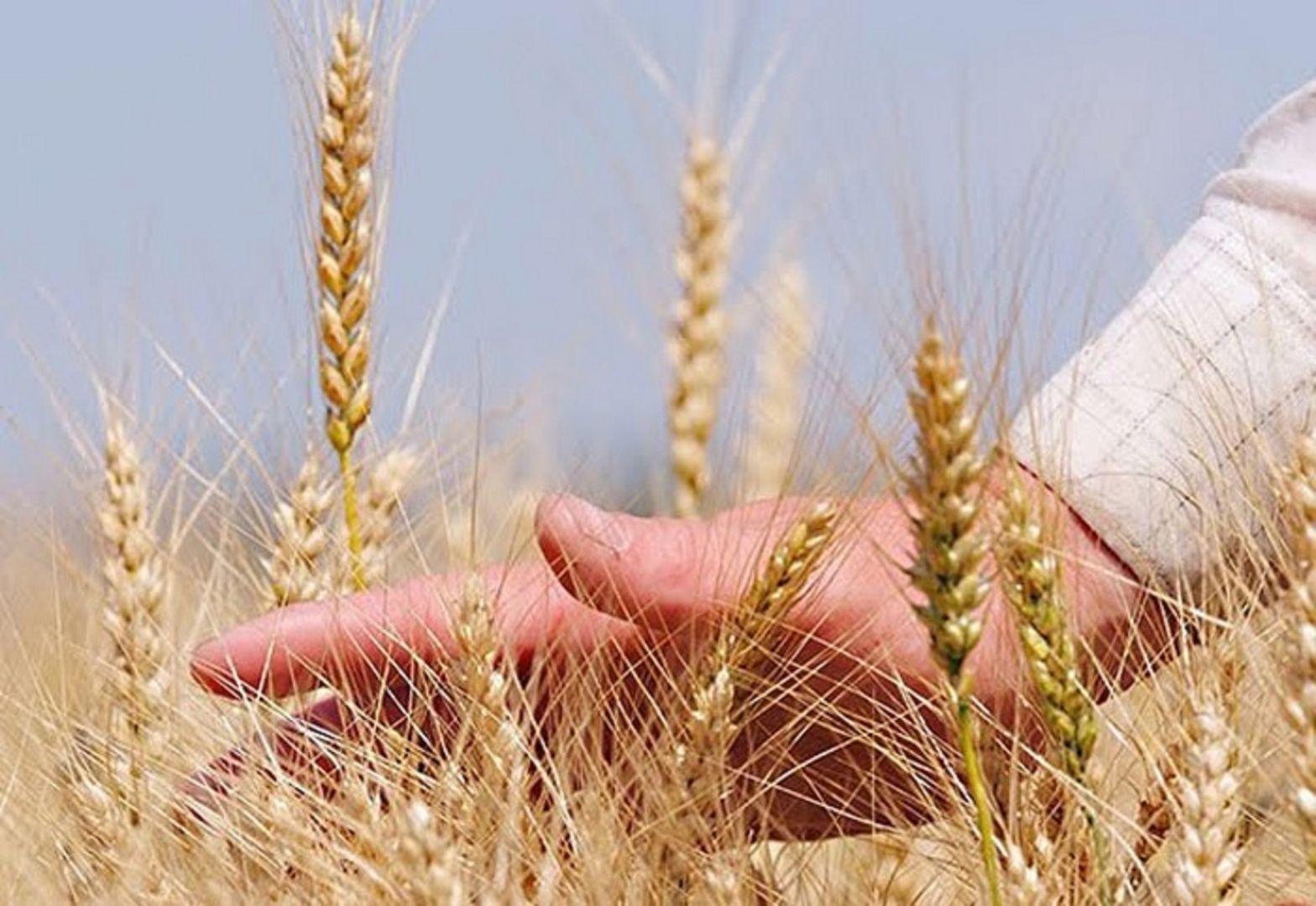Губернатор Ставрополья поздравил работников сельского хозяйства и перерабатывающей промышленности с профессиональным праздником
