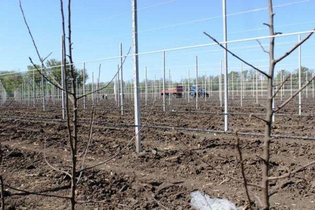В Кочубеевском районе заложили инновационный сад