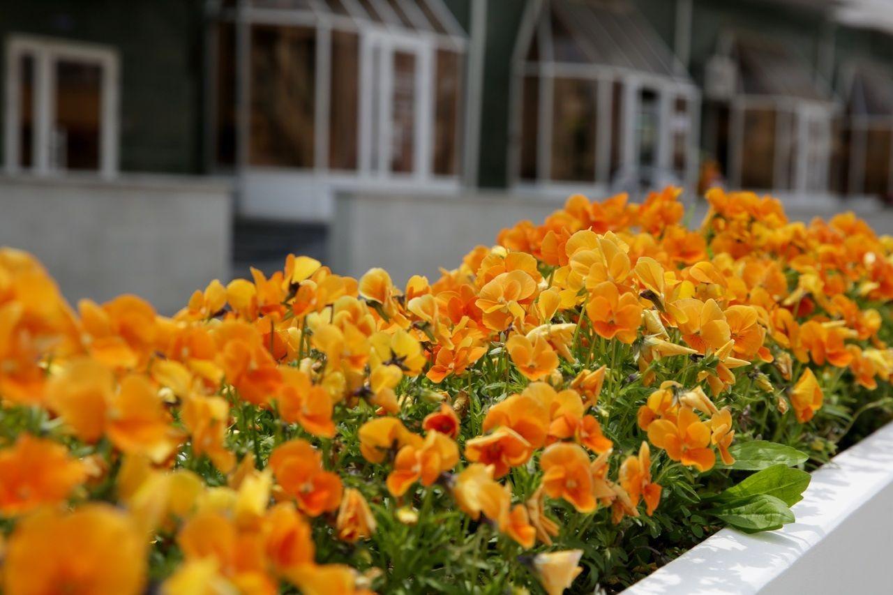 В Ставрополе появятся новые цветы и деревья