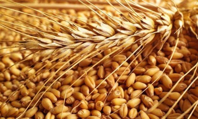 Инвесторы из Венгрии намерены построить на Ставрополье завод по калибровке зерна