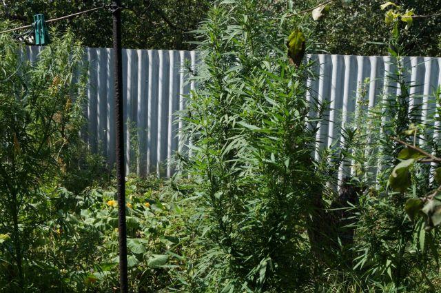 Уставропольца вбагажнике обнаружили более килограмма марихуаны