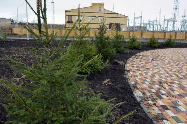 Накануне Дня народного единства ветераны Ставрополя высадили 100 хвойных деревьев