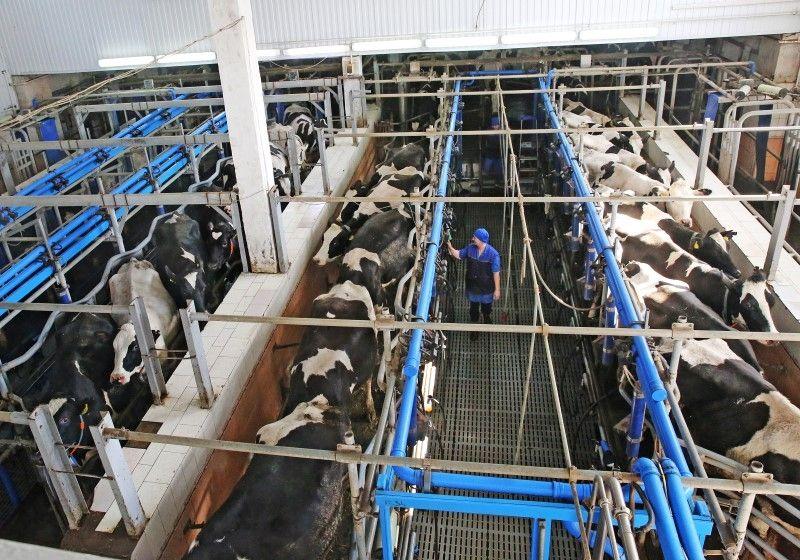 В будущем году ставропольский минсельхоз сделает ставку наживотноводство