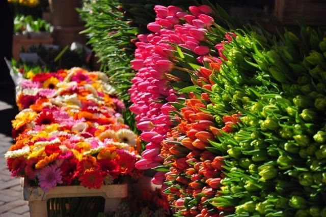 В Ставрополе пройдёт фестиваль цветов