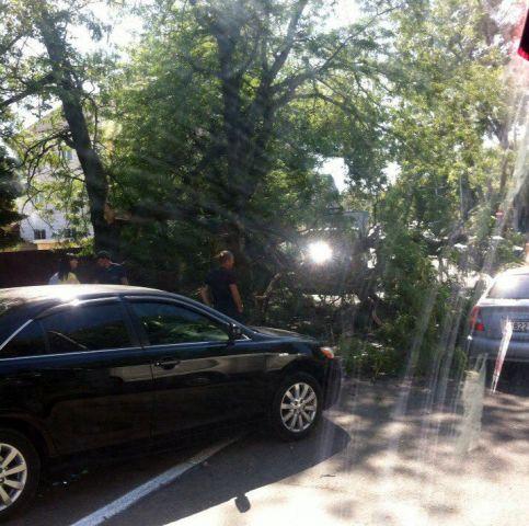 В центре города Ставрополя на дорогу упало дерево