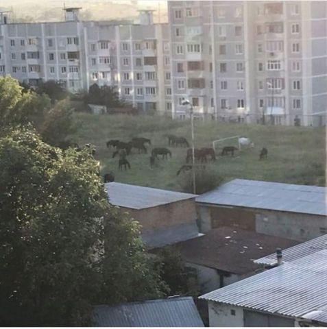 Жительница Кисловодска сняла на видео скачущих по двору лошадей и гоняющихся за ними детей