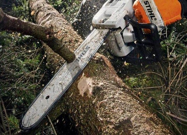 В Кисловодске возбуждено уголовное дело по факту незаконной вырубки деревьев