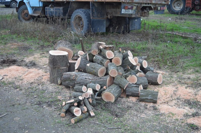 Жителю Ставрополья грозит до двух лет тюрьмы за вырубку деревьев