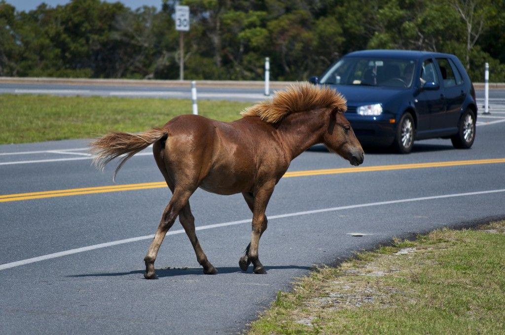 Перебегавшую дорогу лошадь сбил насмерть шофёр «Нивы» наСтаврополье