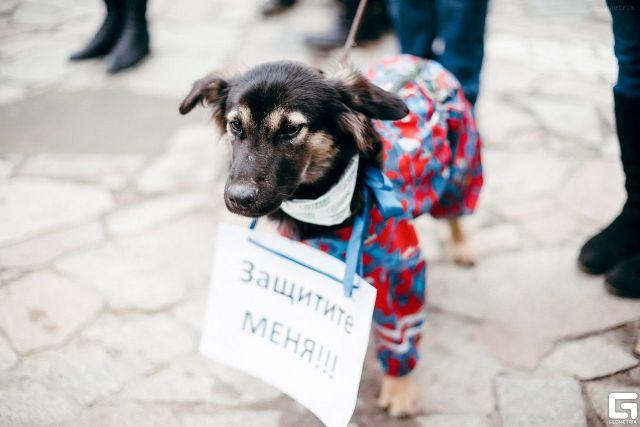 Полицейские Ставрополя не дали местному жителю убить и съесть собаку