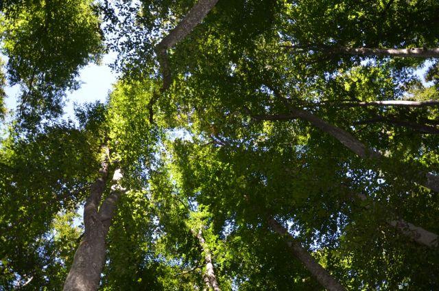 Площадь заказника «Русский лес» будет увеличена