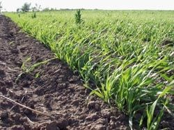 На Ставрополье пройдет региональная научно-практическая конференция по земледелию