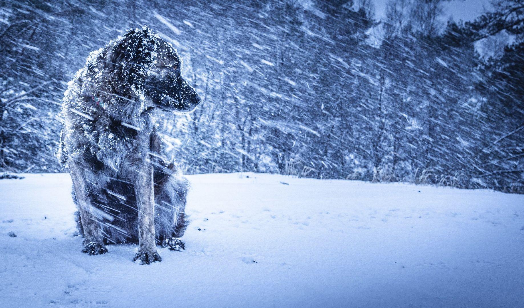 На Ставрополье ожидается похолодание до 10 градусов ниже нуля