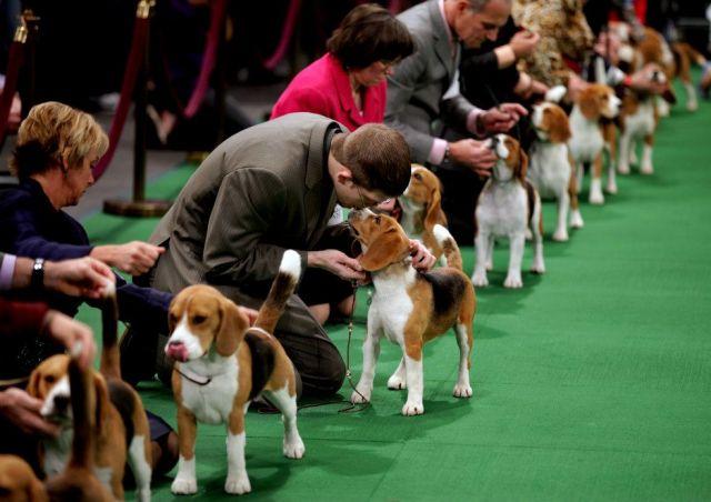 23 декабря центральную площадь Ставрополя захватят собаки всех пород и размеров