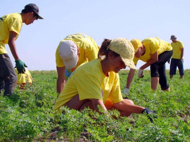 Минтруд Ставрополья организует трудовую занятость подростков