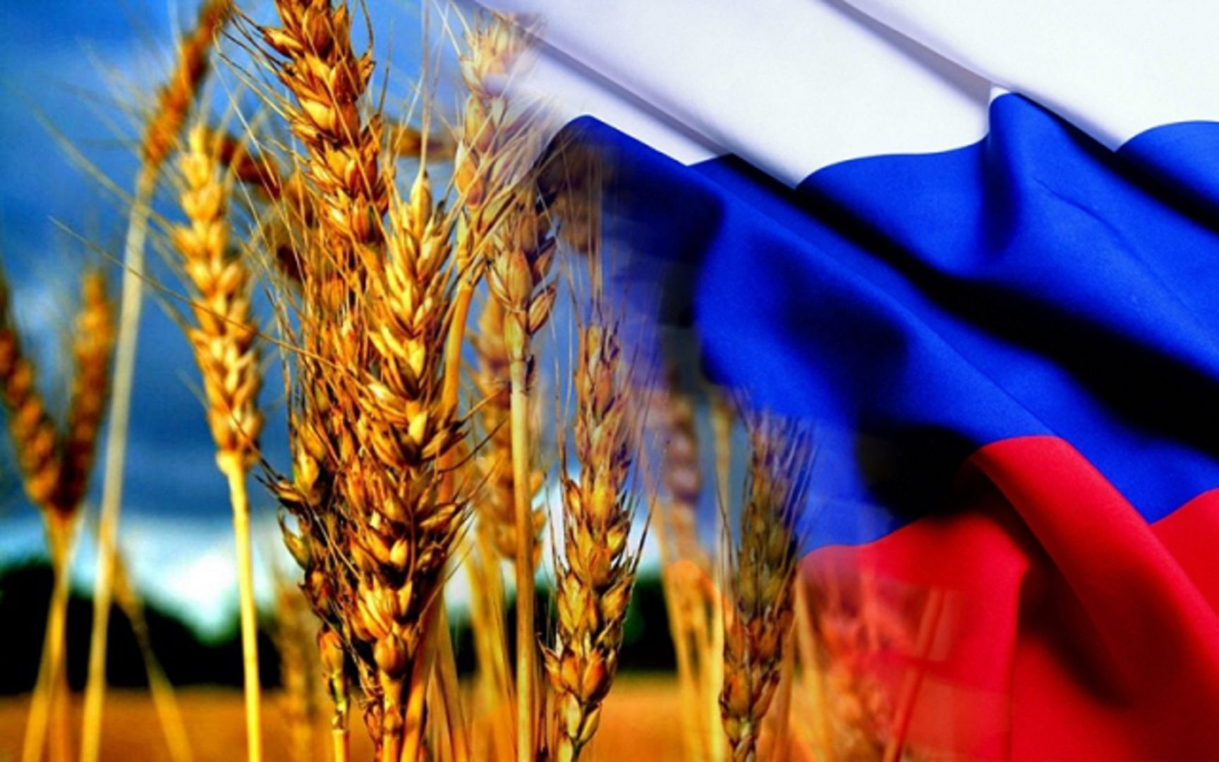 Доля Ставрополья в российском экспорте увеличилась на треть