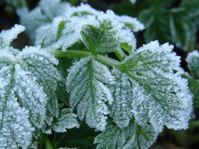 МЧС предупреждает ставропольцев о предстоящих заморозках