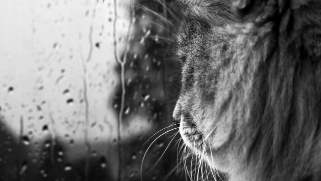 На Ставрополье 16 мая ожидаются сильные грозовые дожди