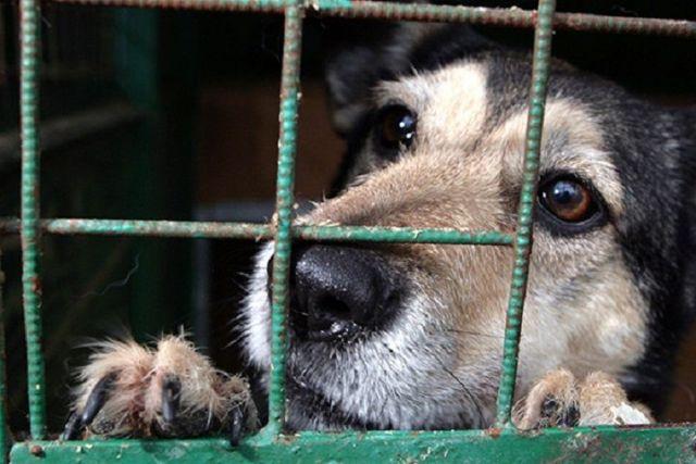 В Думе Ставрополья обсудили ситуацию по отлову и содержанию безнадзорных животных
