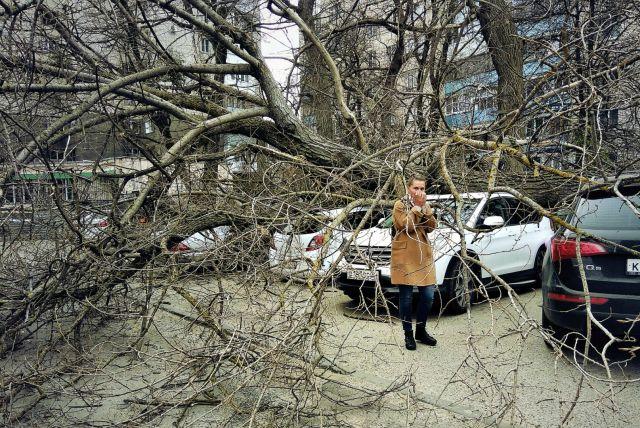 В Ставрополе на машины упали дерево и столб