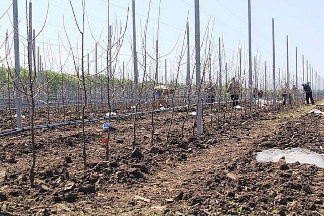 В Ставропольском крае появляются новые сады