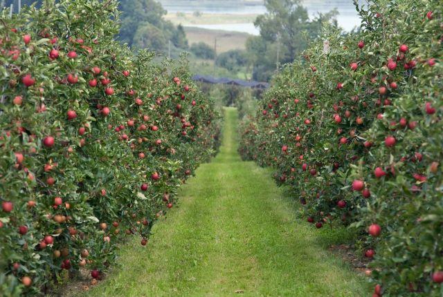 На Ставрополье селяне начали разбивать суперинтенсивные сады