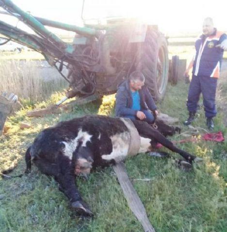 На Ставрополье спасатели достали корову из очистных сооружений