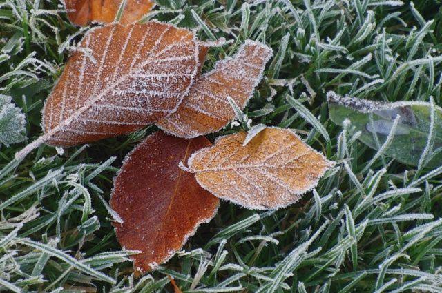На Ставрополье ожидаются заморозки и туман
